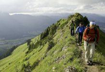 Mit der Kraft der Natur: Alternative Medizin im Trend